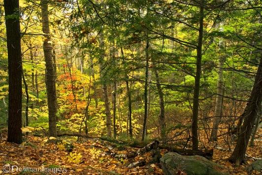 Temenos Forest