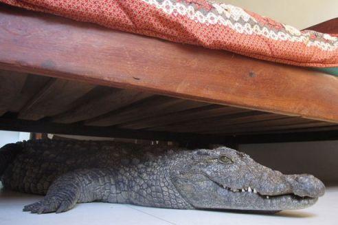 £££-Crocodile-2279946