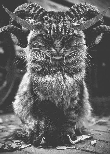baphomet cat