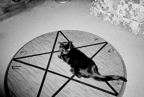 Cat Meowing Marlowe