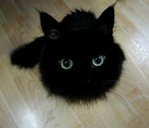 black cat cute
