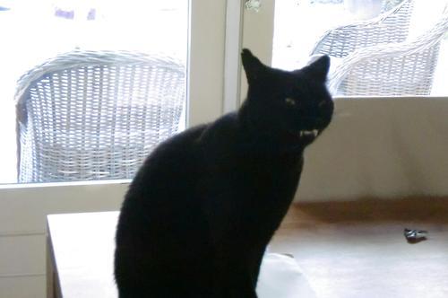 cat vamp