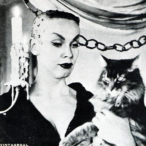 Vampira cats