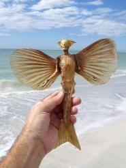 Oceanic Pixie