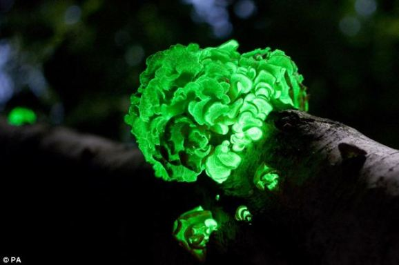 glow trees