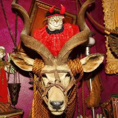 cat horns