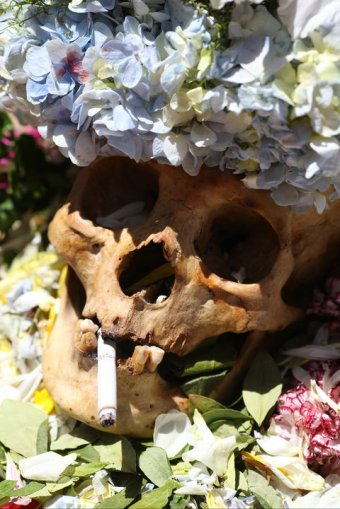 purchased skull